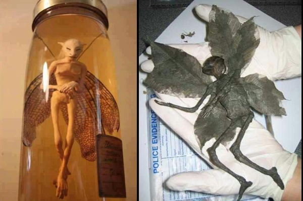 Are Fairy ,Mermaids, Dragons, , Mysterious creatures real? part1.