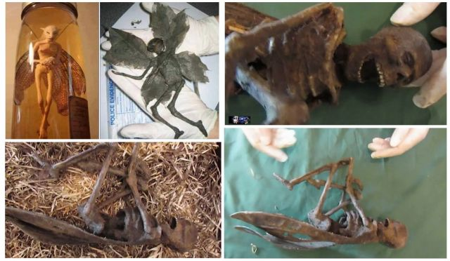 VIDEOS: Mummified fairy found in Glasgow.Scotland UK.