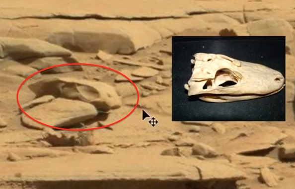 Dragon skeleton discovered on Mars, and also on the ground in the Iranian desert!