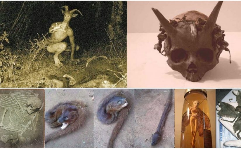 VIDEO: Mythical creatures! Skeletons puzzling creatures. Creatures they really lived?