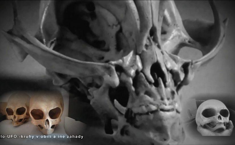 VIDEO: Mysterious skull – an alien?
