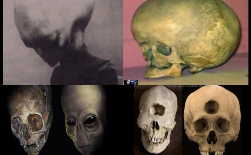 VIDEO: The mysterious 'alien' cranium was discovered in the mountains. The Mystery of the Alien Skulls.