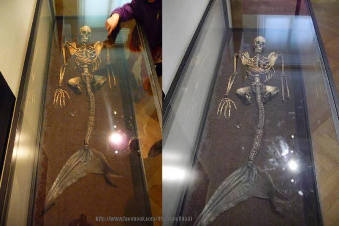 VIDEO: Mermaid Skeleton in National Museum in Copenhagen!