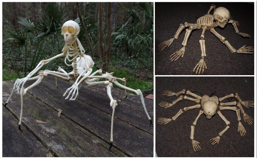 The strange creatures: spider. Skeleton arachnid with real bones. Did he ever live?