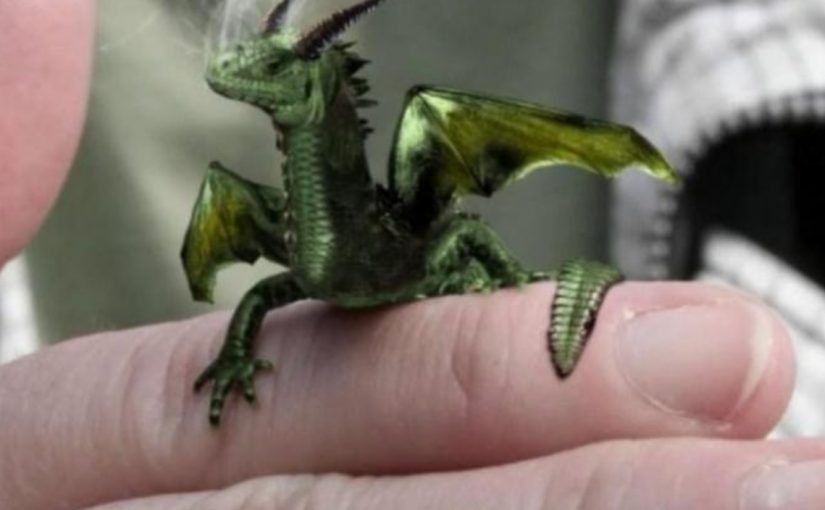 Videos and Pictures Of Real Dragons?