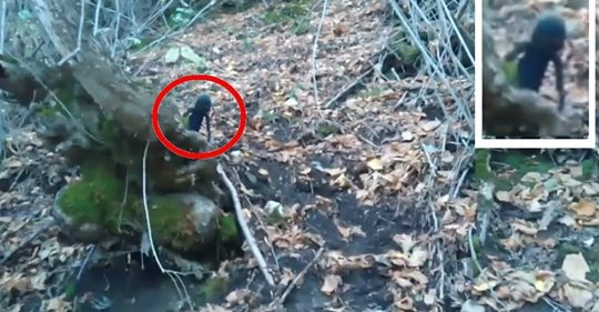 Video: THAT THIS IS AN ALIEN A STRANGE BEING OR GNOME successfully shot on camera in a forest of Russia.